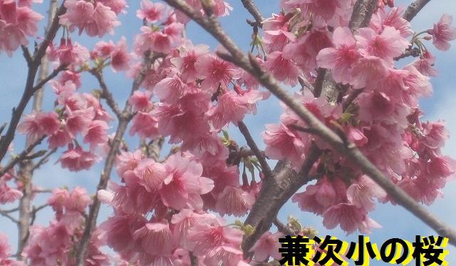 001兼次桜あ